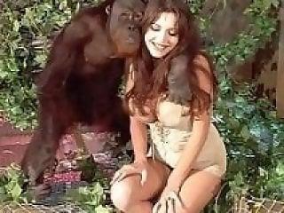 Monkey Animal Porn