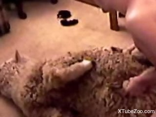 Horny guy decides to fuck an even hornier sheep