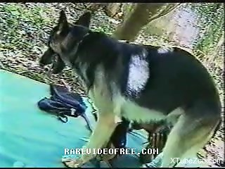 German Shepard fucks tight woman really hard
