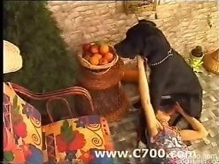 Outdoor brutal horse and dog porn