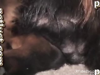 Hard sex with her dog in scenes of home zoophilia