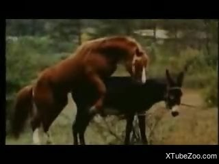 Horse fucking scenes in outdoor to dazzle the horny zoo porn lovers