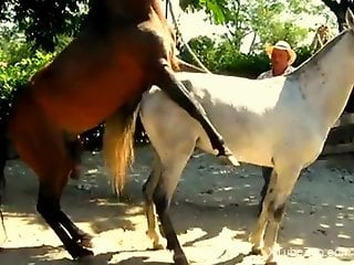 Horse fuck in front of horny zoophilia lover while he's taping