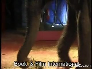 Elephant gets easily seduced by a naked blonde babe