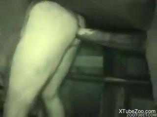 Horny stallion fucking a dude's tight asshole