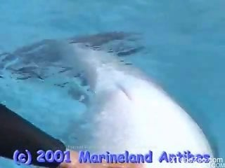 Sexy dolphin showing its dick after getting teased