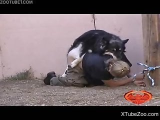 Bound slavegirl getting fucked by a really sexy dog