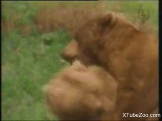 Two bears fucking your new favorite animal porn movie